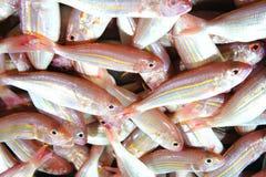 五颜六色的鱼待售 免版税库存照片