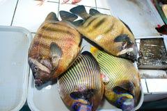 五颜六色的鱼待售 库存照片