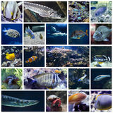 五颜六色的鱼拼贴画 免版税图库摄影