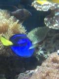 五颜六色的鱼 免版税库存图片