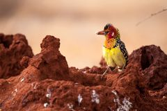 五颜六色的鸟开会 免版税库存照片