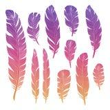 五颜六色的鸟羽毛 皇族释放例证