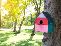 五颜六色的鸟议院在垂悬在树的公园,鸟房子被安置了在各种各样的点 有许多的鸟舍森林 免版税图库摄影