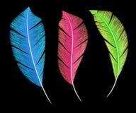 五颜六色的鸟` s用羽毛装饰装饰元素 库存图片