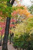 五颜六色的鸡爪枫叶子 免版税库存图片