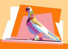 五颜六色的鸽子wpap 免版税图库摄影