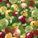 五颜六色的鹅莓背景  库存照片