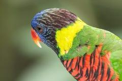 五颜六色的鹦鹉在鸟公园,新加坡 免版税库存图片