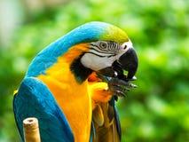 五颜六色的鹦鹉鸟坐栖息处 免版税库存照片