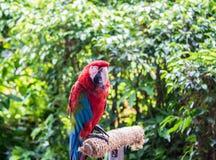 五颜六色的鹦鹉鸟开会 免版税库存照片