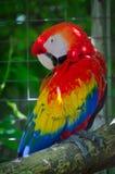 五颜六色的鹦鹉鸟 免版税库存图片
