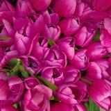 五颜六色的黑暗的紫罗兰色假郁金香,花卉背景 免版税库存图片