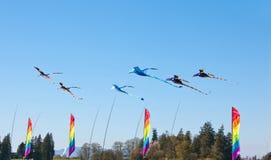 五颜六色的龙风锭床工人和风筝 免版税图库摄影