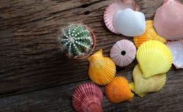 五颜六色的贝类和小仙人掌 免版税库存照片