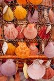 五颜六色的贝壳装饰 库存图片