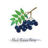 五颜六色的水彩纹理健康果子黑色花揪误码率 皇族释放例证