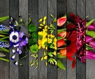 五颜六色的绽放混合 库存图片