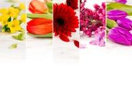 五颜六色的绽放混合 免版税图库摄影