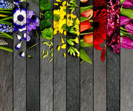 五颜六色的绽放混合 图库摄影