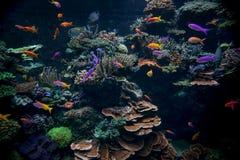 五颜六色的水族馆 图库摄影