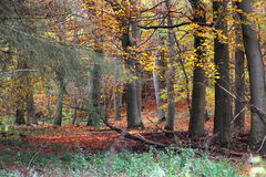 五颜六色的11月森林 库存照片