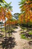 五颜六色的结构树 库存照片