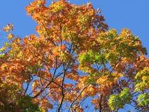 五颜六色的结构树 免版税库存照片