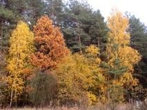 五颜六色的结构树 图库摄影