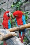 五颜六色的绿翅鸭金刚鹦鹉鸟舍夫妇,坐日志 免版税库存照片