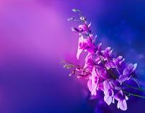 五颜六色的紫色兰花,开花充满活力的软和迷离概念 免版税库存照片