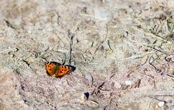 五颜六色的蝴蝶坐地面 免版税库存图片