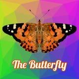 五颜六色的蝴蝶多角形传染媒介 库存图片