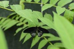 五颜六色的蝴蝶有绿色背景 库存图片