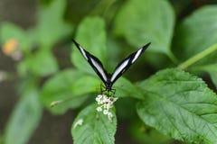 五颜六色的蝴蝶有绿色背景 免版税图库摄影