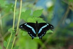 五颜六色的蝴蝶有绿色背景 免版税库存照片