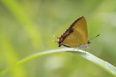 五颜六色的蝴蝶炫耀 库存图片