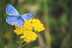 五颜六色的蝴蝶 免版税图库摄影