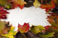 五颜六色的autum叶子、坚果和莓果框架在pap附近 图库摄影