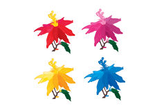 五颜六色的eurphobia花设置了 库存图片