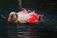五颜六色的flaminggo 库存图片