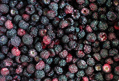 五颜六色的juisy美味的黑莓背景 图库摄影