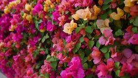 五颜六色的Kertas在有吹在HD的风的原野庭院里开花植物 股票视频