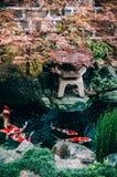 五颜六色的Koi鲤鱼鱼在日本庭院筑成池塘与植物, tre 库存图片