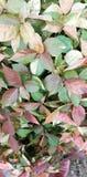 五颜六色的leaf& x27; s 库存图片