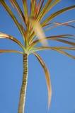 五颜六色的palmtree 免版税库存照片