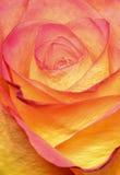 五颜六色的Rosie 免版税库存照片