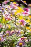 五颜六色的summerflowers 免版税库存图片