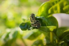 五颜六色的Swallowtail细节 库存图片