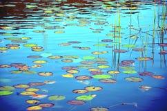 五颜六色的waterlily池塘 免版税库存图片