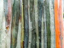 五颜六色皮肤木地球口气垂直线 免版税库存照片